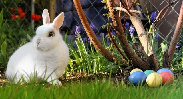 Eier vom Osterhasen? Warum bringt ein Hase die Eier?